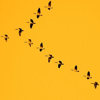 Letgobirds